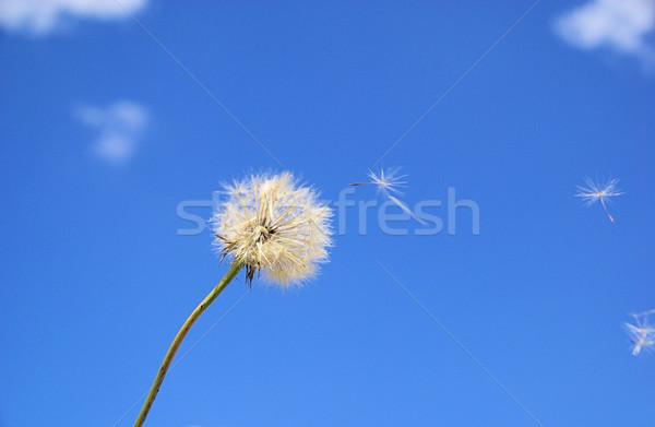 Occidental 12 cielo hoja verano planta Foto stock © LianeM