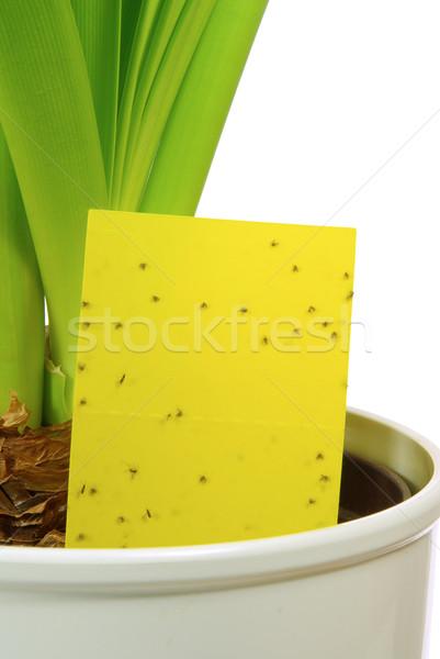 yellow insect stick 04 Stock photo © LianeM
