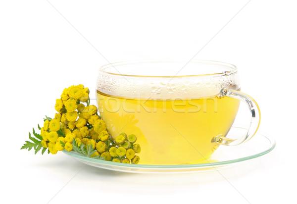 tea tansy 01 Stock photo © LianeM