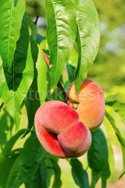 saturn peach 03 Stock photo © LianeM