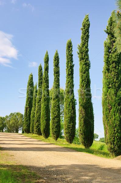Toskania cyprys niebo drogowego krajobraz drzew Zdjęcia stock © LianeM