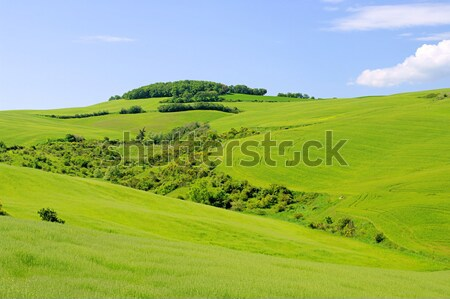 Toszkána dombok fa tavasz mező zöld Stock fotó © LianeM