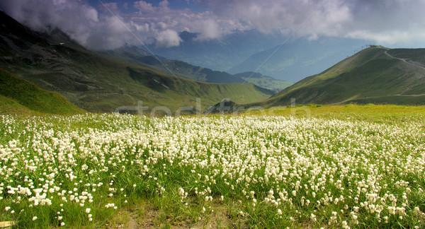 Senderismo montana 14 flor viaje cable Foto stock © LianeM