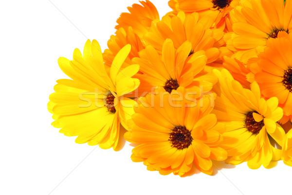 26 flor flores jardim fundo cama Foto stock © LianeM
