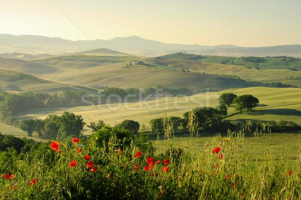 Foto stock: Toscana · hills · 18 · flor · casa · árvore