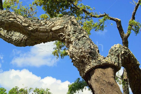 cork oak 50 Stock photo © LianeM