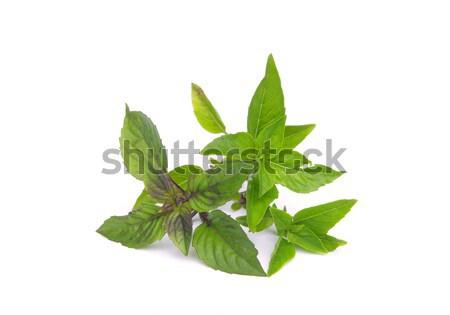 Borsmenta növény friss menta makró egészséges Stock fotó © LianeM