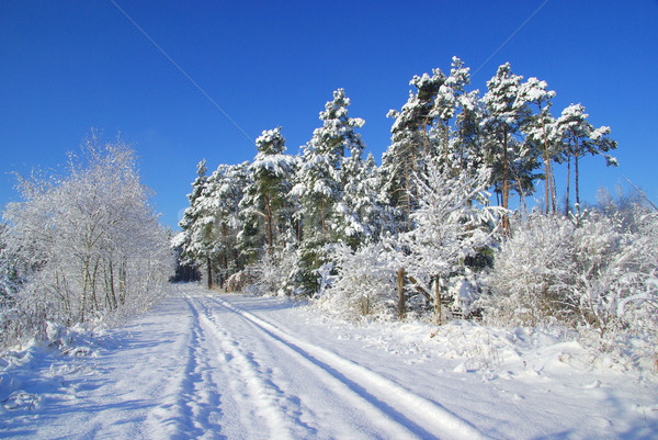 forest in winter 13 Stock photo © LianeM
