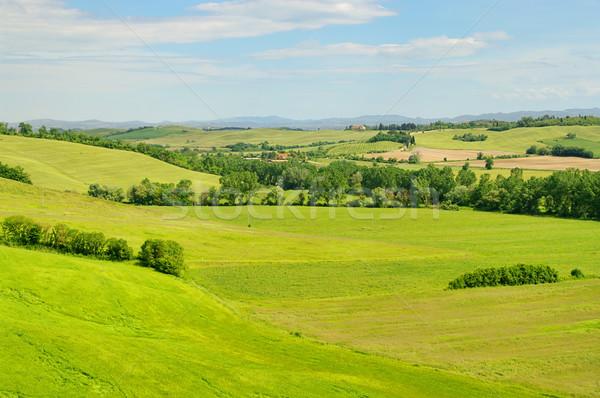 Тоскана холмы дома дерево весны трава Сток-фото © LianeM