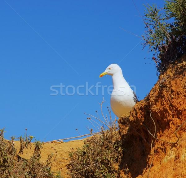 gull 18 Stock photo © LianeM