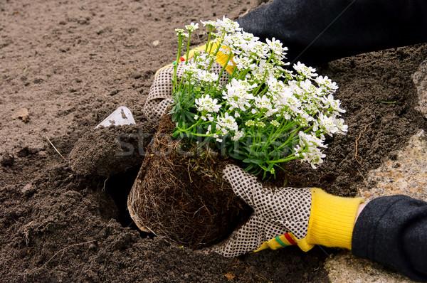 Как мы сажали цветы в городе 140