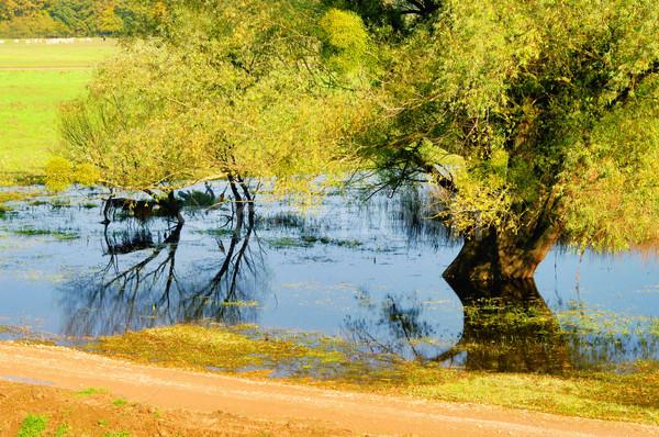 English salice albero cielo acqua foglia Foto d'archivio © LianeM