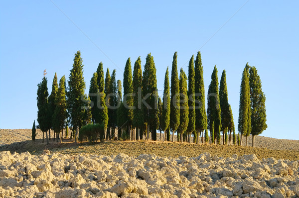 Toszkána erdő ősz fa tájkép nyár Stock fotó © LianeM