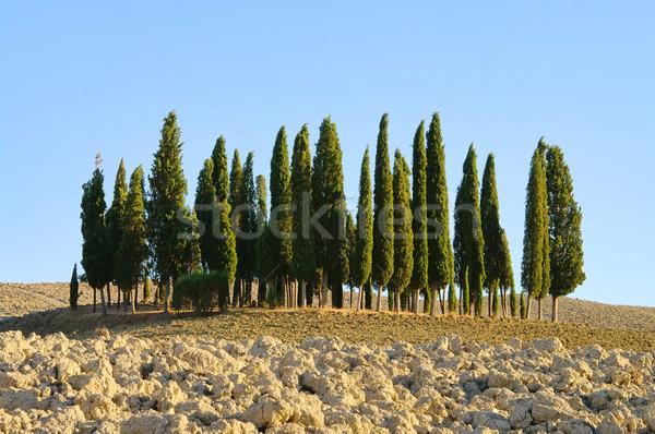 Toscana forestales caída árbol paisaje verano Foto stock © LianeM