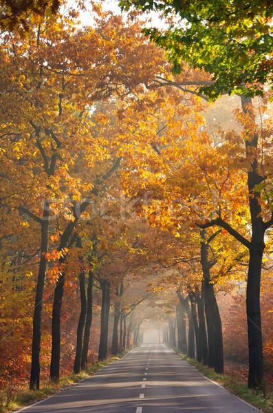 avenue in fall 24 Stock photo © LianeM