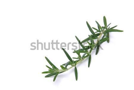 Rosemary 05 Stock photo © LianeM