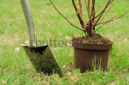 Krzew pracy domu liści ziemi Zdjęcia stock © LianeM