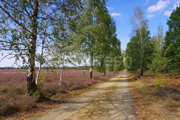 Heath landscape with flowering Heather and path Stock photo © LianeM