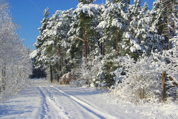 forest in winter 14 Stock photo © LianeM