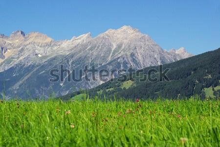 Berg 14 gras natuur zomer groene Stockfoto © LianeM