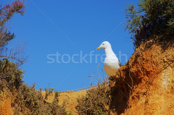 Foto stock: 17 · playa · aves · arena · rock · blanco