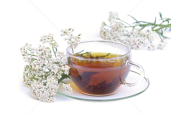 tea yarrow 02 Stock photo © LianeM