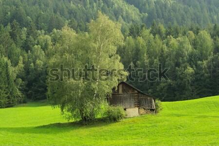 Alps pasture 02 Stock photo © LianeM