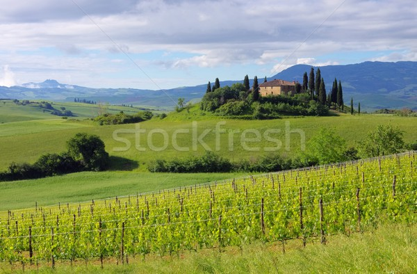 Toscane maison ciel arbre nature arbres Photo stock © LianeM