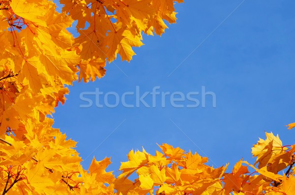 Foto stock: Hoja · de · arce · 19 · árbol · naturaleza · luz · hojas