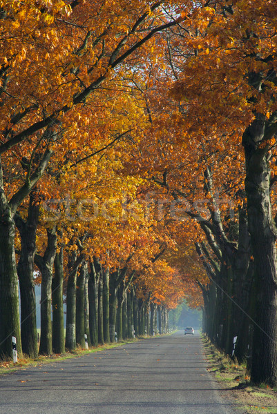 avenue in fall 05 Stock photo © LianeM