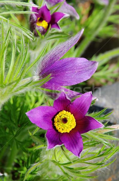 Bloem 15 natuur schoonheid groene plant Stockfoto © LianeM