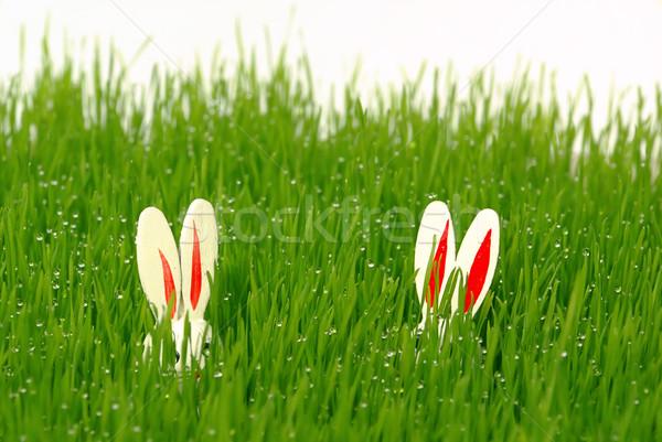 easter bunny 10 Stock photo © LianeM