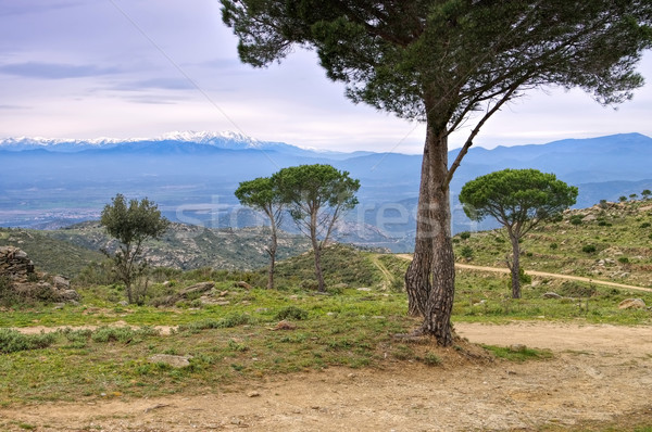 Serra de l Albera in northern Spain Stock photo © LianeM