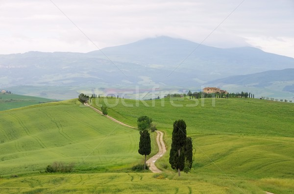 Tuscany cypress trees with track  Stock photo © LianeM