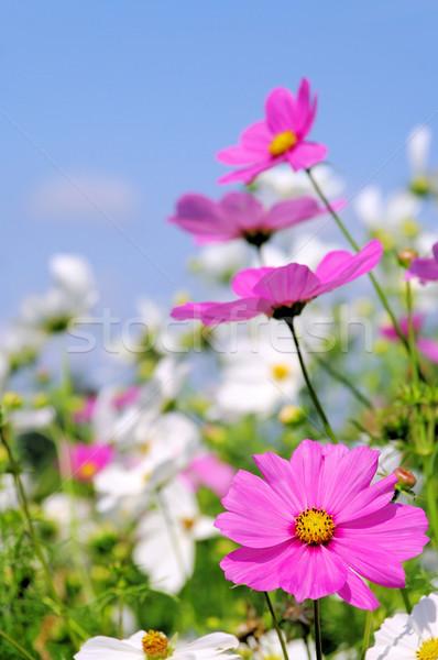 15 hemel bloem tuin schoonheid zomer Stockfoto © LianeM