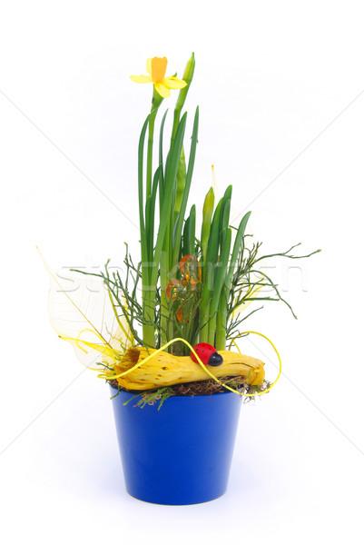 Dame kever Blauw plant witte aanwezig Stockfoto © LianeM