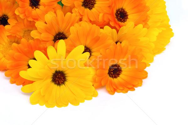 25 çiçekler bahçe yatak beyaz buket Stok fotoğraf © LianeM