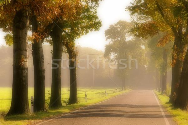 avenue in fall 16 Stock photo © LianeM