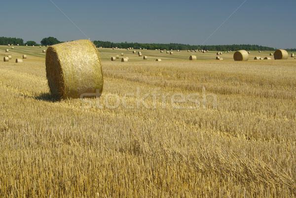 bale of straw 14 Stock photo © LianeM