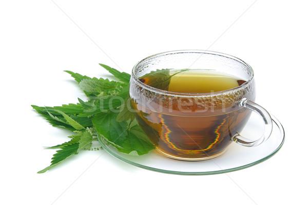 tea nettle 02 Stock photo © LianeM