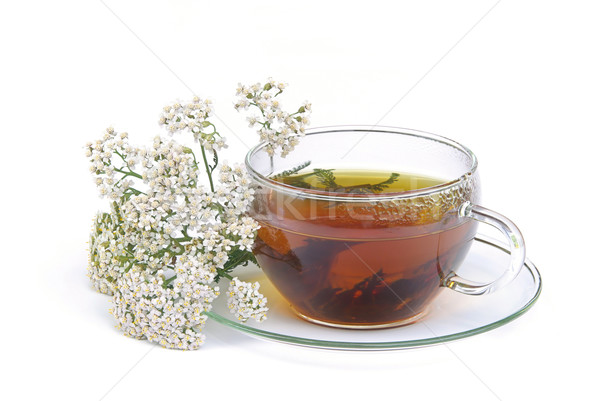 tea yarrow 01 Stock photo © LianeM