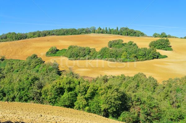 Stok fotoğraf: Toskana · tepeler · düşmek · 10 · ağaç · ağaçlar