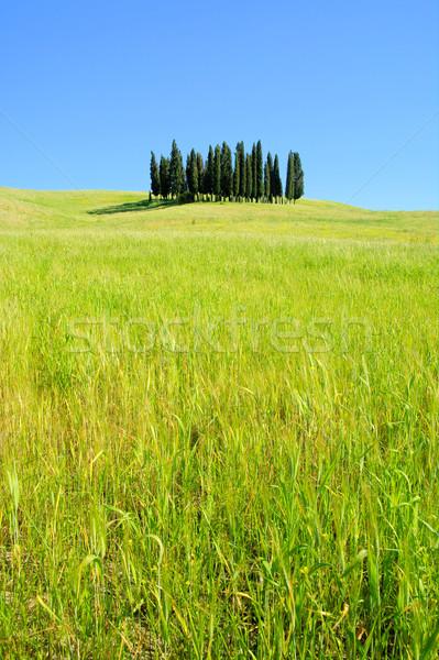 Toszkána erdő fa tavasz fű nyár Stock fotó © LianeM