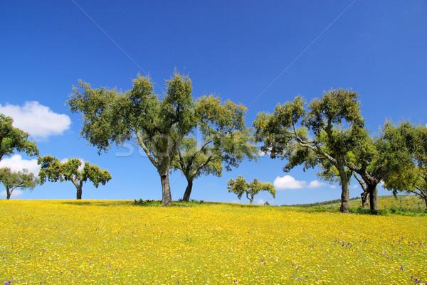 meadow and cork oaks 11 Stock photo © LianeM