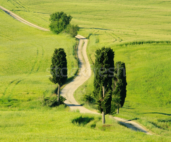Toskana tepeler ağaç çim doğa alan Stok fotoğraf © LianeM