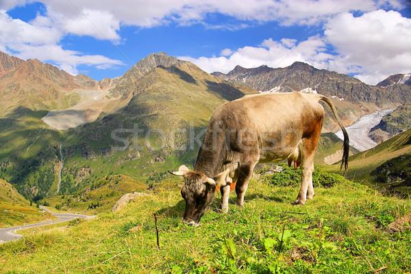 alp cow 20 Stock photo © LianeM