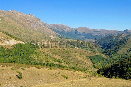 19 дерево лес горные рок гор Сток-фото © LianeM
