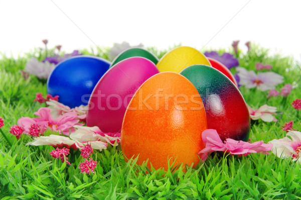 Сток-фото: пасхальных · яиц · цветок · луговой · 22 · трава · яйцо