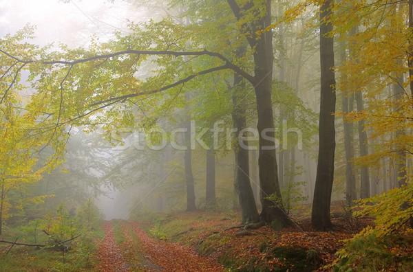 beech forest in fog 08 Stock photo © LianeM