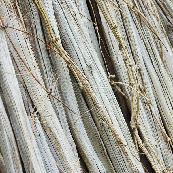 Asciugare legno natura pattern naturale Foto d'archivio © LianeM